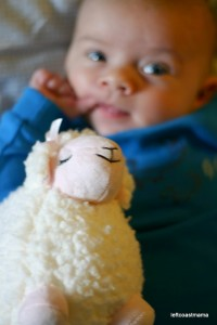 Quinlan and the Lamb