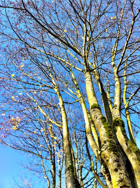 I Love Bare Trees and Blue Sky