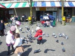 Aidan and the birds