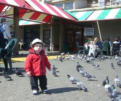 Aidan and the birds
